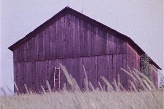 Barn Rushes
